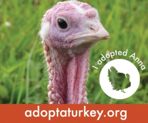 2014-Adopted-Turkeys-472x394-Anna