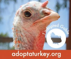 2014-Adopted-Turkeys-472x394-Gable