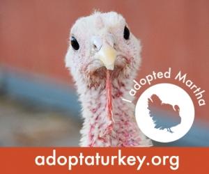 2014-Adopted-Turkeys-472x394-Martha