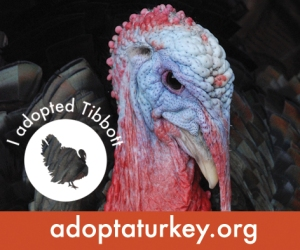 2014-Adopted-Turkeys-472x394-Tibbott