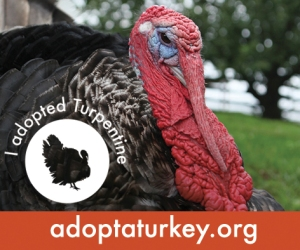 2014-Adopted-Turkeys-472x394-Turpentine